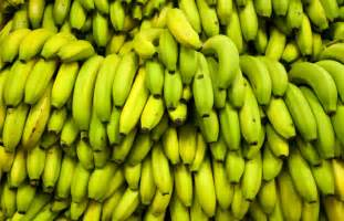 Image result for green bananas