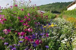 Blumen Erkennen App : aktuelle informationen vom weilerhof weilerhofladen frisches gem se aus eigenem anbau ~ Eleganceandgraceweddings.com Haus und Dekorationen