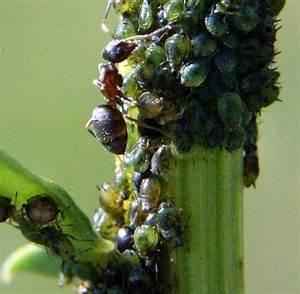 Ameisen Bekämpfen Im Garten : garten ameisen im nest bek mpfen welt ~ Frokenaadalensverden.com Haus und Dekorationen