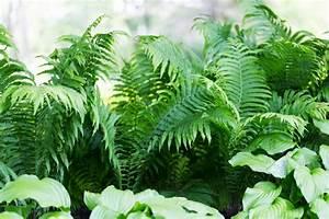 Farn Im Garten : farn umpflanzen so machen sie alles richtig ~ Orissabook.com Haus und Dekorationen