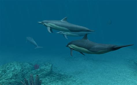 Dolphins 3d Screensaver And Animated Wallpaper - dolphins 3d screensaver and animated wallpaper 1 0 build