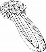 Drawing Clipart Celery Library Clip Line Coloring Vegetable sketch template