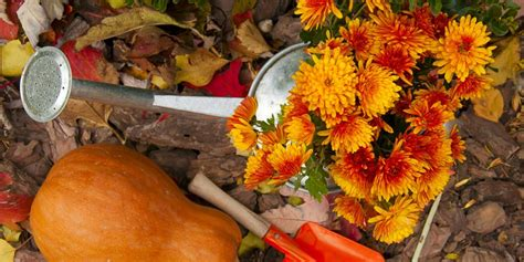 Herbst Gartenarbeit by Cool Season Gardening Tips How To Plant For Fall Ftd