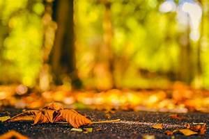 Splendor, Fall, Nature, Bokeh, Autumn, Splendor, Autumn