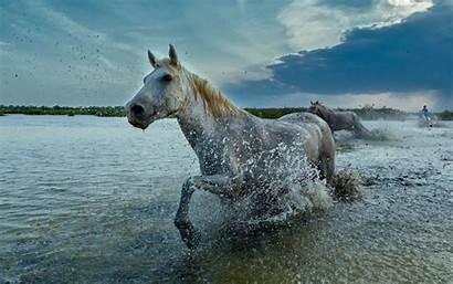 Animal Windows Theme Pc Pack Kingdom Horses