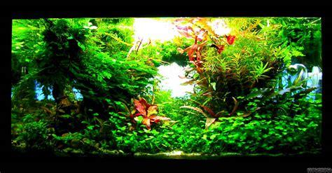 welches glas für aquarium princess flowgrow aquascape aquarien datenbank