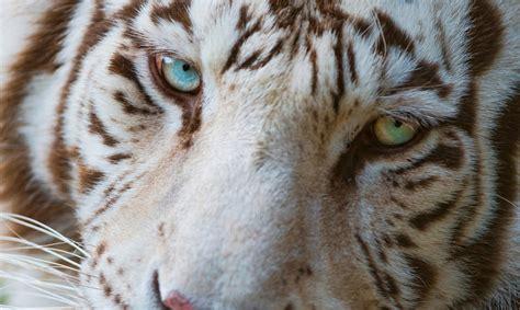 Animal Planet Free Wallpapers Free Animal Images
