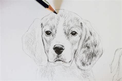 draw realistic dogs step  step