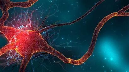 Brain Wallpapers Neuroscience Gehirn Cells Neurology Digregorio