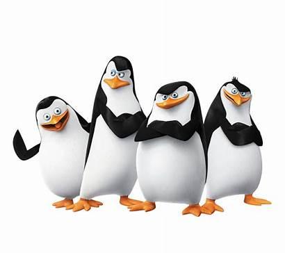 Madagascar Penguins Skipper Penguin Kowalski Dreamworks Film