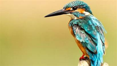 Bird Kingfisher Birds Wallpapers Walls