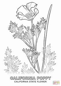 California State Flower coloring page | Free Printable ...