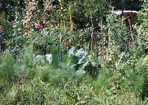Permakultur Garten Anlegen : permakultur definition permakulturgarten und selbstversorgergarten ~ Markanthonyermac.com Haus und Dekorationen