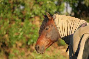 fibrome und granulome beim pferd homoeopathisch behandeln