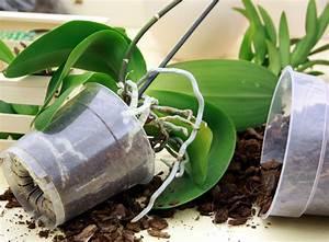 Orchideen Klebrige Blätter : orchideen umtopfen auf den richtigen zeitpunkt sowie auf die wurzeln achtgeben ~ Whattoseeinmadrid.com Haus und Dekorationen