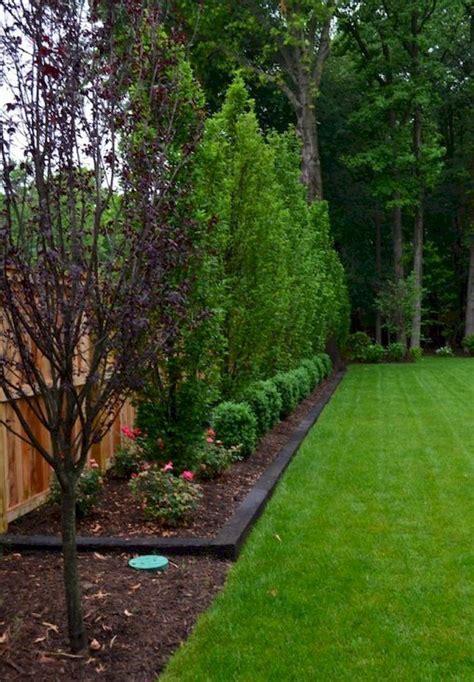 Backyard Privacy Landscaping best 25 backyard landscaping privacy ideas on