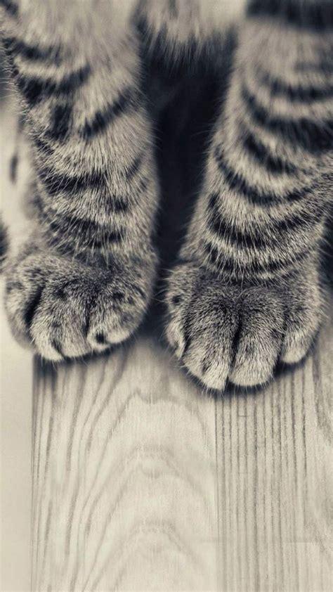 animals iphone   wallpapers striped kitten legs