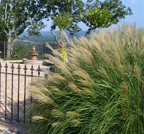 ornamental grass landscape doit yourself ideas for landscaping with ornamental grasses must see