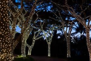 light wrapped trees garden ideas houseandgarden co uk