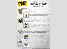non toxic house plants for dogs 28 images non toxic