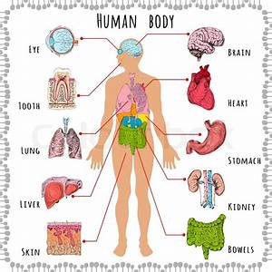Human Body Medical Infographics With