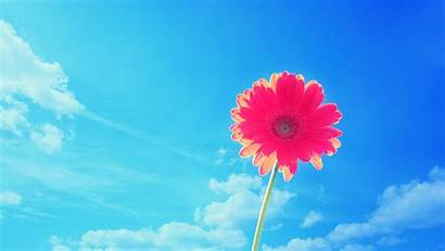 Bright Sky Wallpapers Background Desktop Stem Sweet