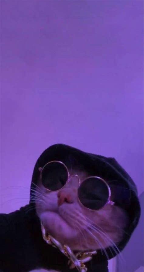 pin hilaryheid cat wallpaper cat aesthetic cat