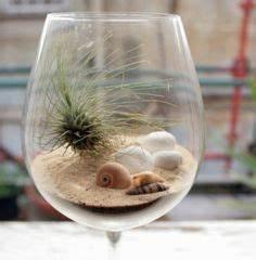 Tillandsien Im Glas : die besten 25 laden schaufenster ideen auf pinterest fenster auslagen schaufenster und ~ Eleganceandgraceweddings.com Haus und Dekorationen