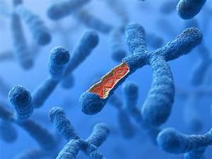 Triple X Syndrome  Symptoms  Chromosomes  Diagnosis  And Treatment