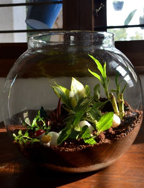 fishbowl terrarium  inches   bangalore