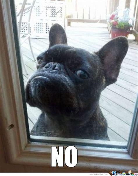 Grumpy Cat Meme Dog