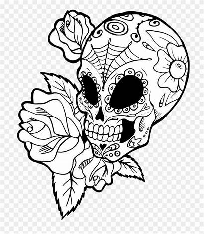 Skull Sugar Mexican Drawings Drawing Skulls Clipart