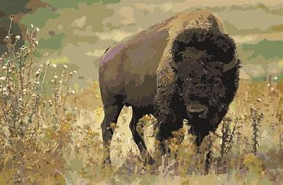 Bison American Clipart