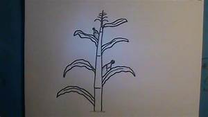 how to draw corn stalks - Google Search | Play | Pinterest