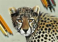 Realistic Colored Pencil Animal Drawings