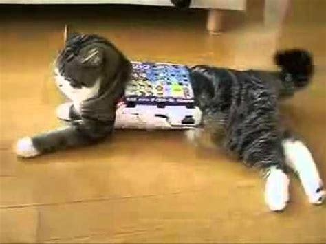 katze flutscht durch den karton fun youtube