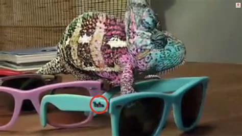 chameleon change color chameleons can change color but that ain t real