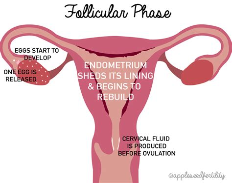 shedding uterine lining after dc 100 shedding of uterine lining 5 signs from your