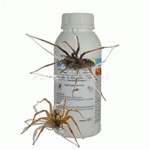 Mittel Gegen Spinnen Im Haus : haus spinnen tiere arten giftige bek mpfungs mittel ~ Michelbontemps.com Haus und Dekorationen