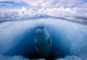 Frozen Treasure: Defending the Arctic | Earthjustice  Arctic
