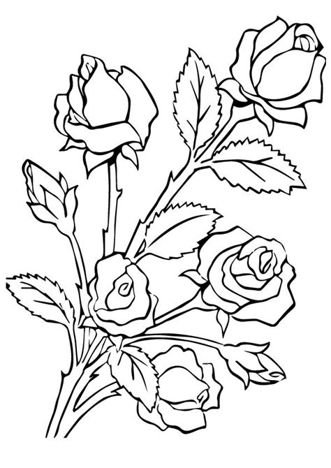 printable rose coloring pages rose coloring pictures  preschoolers kids parentunecom