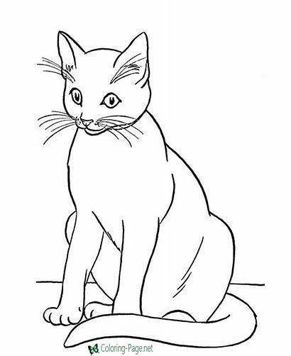 Coloring Cat Printable Pages Cats Below