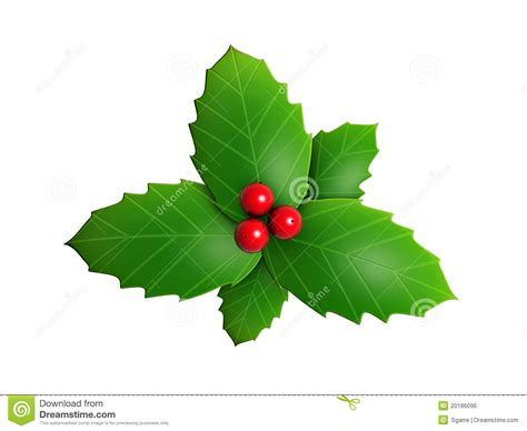 holly leaves  red berry royalty  stock image