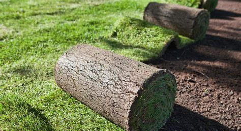 lawn installation seed or sod lawn choose the best method for lawn installation