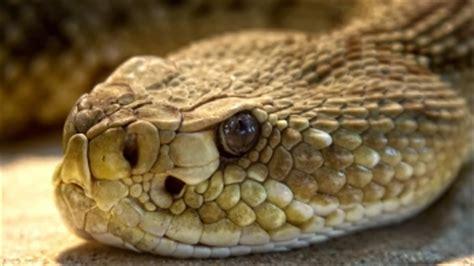 Giftschlangen  Eine Übersicht Die Giftigsten Schlangen