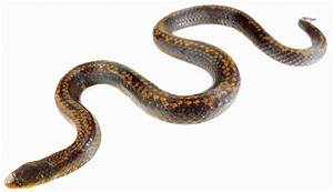 3 New Snakes Found, One Named for Underworld Monster