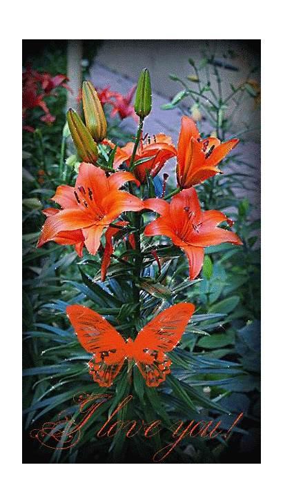 Flores Butterfly Mirta Gifshermosos Encontradas Gifs Google