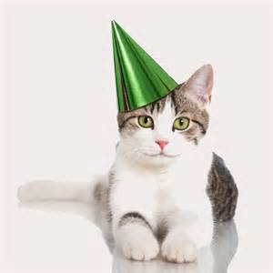 cat birthday it s your cat s birthday you and your can throw a