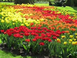 kitchen ideas colors inspiring images kuekenhof gardens tulips