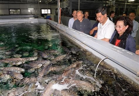 fish grouper indoor farming farm water production aquaculture pollution sustainable method groupers stable temperature sea agriculture fisheries development unaffected raised